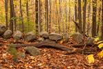 Rock Wall, Flat Rock Wildlife Sanctuary, Mass Audubon, Fitchburg, Massachusetts