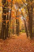 Trail Through Woods, Flat Rock Wildlife Sanctuary, Mass Audubon, Fitchburg, Massachusetts