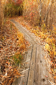Boardwalk on East Pond Trail, Jamaica Bay Wildlife Refuge, Gateway National Recreation Area, Queens, New York