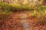 Foster Cove Loop Trail, Ninigret National Wildlife Refuge, Charlestown, Rhode Island