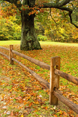 Fence and Fallen Leaves, Great Brook Farm State Park, Carlisle, Massachusetts