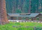 Giant Forest Museum, Sequoia National Park, Sierra Nevada Mountain Range, California