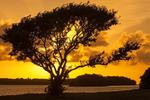 Tree Silhouetted at Sunset, Flamingo Area, Florida Bay, Everglades National Park, Florida