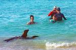Person and Galapagos Sea Lion, Gardner Bay, Hood Island, Espanola, Galapagos National Park, Ecuador