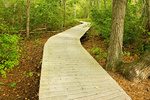 Wooden Boardwalk, Beech Forest Trail, Provincelands Area, Cape Cod National Seashore, Provincetown, Massachusetts