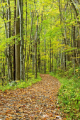 Jakes Creek Trail, Great Smoky Mountains National Park, Tennessee