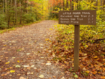 Autumn Foliage, Little River Trail, Elkmont Area, Great Smoky Mountains National Park, Tennessee