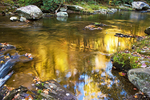 Golden Reflections, Little River, Elkmont Area, Great Smoky Mountains National Park, Tennessee