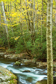 Little River, Elkmont Area, Great Smoky Mountains National Park, Tennessee