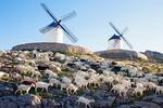 Windmills and Sheep Grazing, Consuegra, Province of Toledo, Castile-La Mancha, Spain