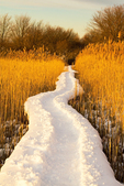 Hellcat Swamp Boardwalk in Winter, Parker River National Wildlife Refuge, Plum Island, Newburyport, Massachusetts
