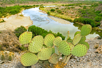 Prickly Pear Cactus and the Rio Grande, Santa Elena Canyon, Chisos Mountains, Chihuahuan Desert, Big Bend National Park, Texas