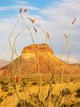 Ocotillo and Cerro Castolon, Chisos Mountains, Chihuahuan Desert, Big Bend National Park, Texas