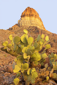 Prickly Pear Cactus and Cerro Castolon, Chisos Mountains, Chihuahuan Desert, Big Bend National Park, Texas