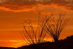 Ocotillo Sunset, Chisos Mountains, Chihuahuan Desert, Big Bend National Park, Texas