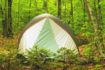 Tent Camping in Lafayette Place Campground, Franconia Notch State Park, White Mountains, New Hampshire