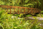 Wooden Footbridge, Marymere Falls Trail, Olympic National Park, Washington