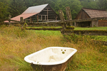 Bathtub and Buildings, Kestner Homestead, Quinault Rainforest, Olympic National Park, Washington