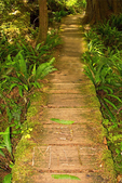 3 Mile Marker, Boardwalk to Cape Alava, Cape Alava Loop, Ozette Triangle, Olympic National Park, Washington