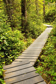 Boardwalk to Cape Alava, Cape Alava Loop, Ozette Triangle, Olympic National Park, Washington
