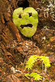 Leaf Face, Cape Alava Loop, Ozette Triangle, Olympic National Park, Washington