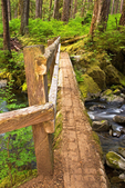 Wooden Footbridge, Lovers Lane Trail, Olympic National Park, Washington