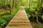Boardwalk, Trail of the Shadows, Longmire Area, Mount Rainier National Park, Washington
