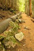 Wooden Water Pipe, Carter Falls Trail, Wonderland Trail, Mount Rainier National Park, Washington