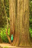 Child by Western Red Cedar, Thuja plicata, Grove of the Patriarchs, Mount Rainier National Park, Washington