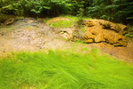 Travertine Calcium Carbonate Wall, Hot Springs Nature Trail, Ohanepecosh, Mount Rainier National Park, Washington