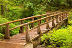 Wooden Footbridge, Silver Falls Trail, Ohanepecosh, Mount Rainier National Park, Washington