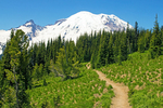 Mount Rainier and Silver Forest Trail, Mount Rainier National Park, Washington