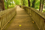 Boardwalk, Nisqually National Wildlife Refuge, Lacey, Washington