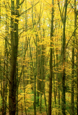 Autumn Foliage, Arcadia Wildlife Sanctuary, Mass Audubon, Easthampton, Massachusetts