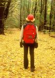 Hiker in Woods, Arcadia Wildlife Sanctuary, Mass Audubon, Easthampton, Massachusetts