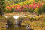 Beaver Dam, Zealand Trail, White Mountains, Crawford Notch, Bethlehem, New Hampshire