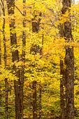 Autumn Foliage in the White Mountains, Kancamagus Highway, White Mountains, New Hampshire
