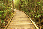 Wooden Boardwalk Through Royal Palm Hammock Trail, Collier-Seminole State Park, Naples, Florida