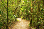 Royal Palm Hammock Trail, Collier-Seminole State Park, Naples, Florida