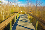 Boardwalk, Dwarf Cypress Forest, Everglades National Park, Florida