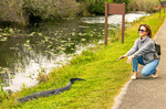 Person and Alligator, Shark Valley, Everglades National Park, Florida