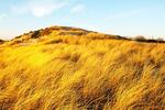 Golden Light on Sand Dunes, Parker River National Wildlife Refuge, Plum Island, Newburyport, Massachusetts