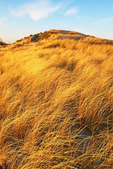 Golden Light on Sand Dunes, Parker River National Wildlife Refuge, Plum Island, Newburyport, Massachusetts