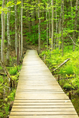 Boardwalk in Niquette Bay State Park, Colchester, Vermont