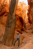 Hiker and Douglas Fir Tree, Wall Street Trail, Bryce Canyon National Park, Utah