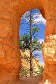 Window, Queen's Garden Trail, Erosional Formations, Bryce Canyon National Park, Utah