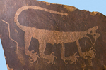 Mountain Lion Petroglyph in Painted Desert Inn Museum, Petrified Forest National Park, Holbrook, Arizona
