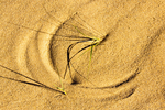 Beach Grass Design in Sand, Cape Cod National Seashore, Massachusetts
