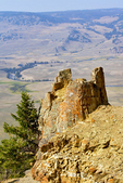 Standing Petrified Trees, Specimen Ridge, Lamar Valley, Yellowstone National Park, Wyoming