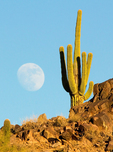 Full Moon and Saguaro Cactus, Phoenix Mountains Park, Phoenix, Arizona